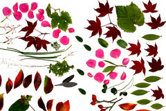 Autumnal Offerings. Autumnal flowers and leaves on a white background Royalty Free Stock Photo