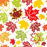 Autumnal ornament Stock Images