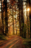 Autumnal painted forest Stock Photos