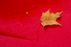 Autumnal painted leaf Royalty Free Stock Photography