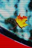 Autumnal painted leaf Stock Image