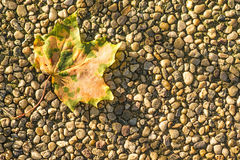 Autumnal painted leaf Royalty Free Stock Photos