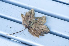 Autumnal painted leaf Stock Photos