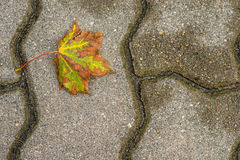 Autumnal painted leaf Royalty Free Stock Image