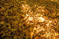 Autumnal painted leaves. In warm, sunny color royalty free stock photography