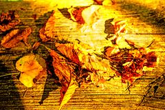 Autumnal painted leaves in warm, sunny color. On a bench stock photos