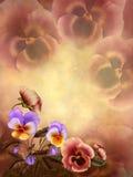Autumnal pansies Stock Photos