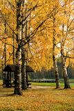 Autumnal park royalty free stock photo