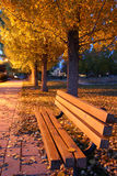 Autumnal park. Scenic view of illuminated trees in Autumnal park with wooden bench in foreground royalty free stock images