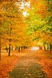 Autumnal park Stock Photos