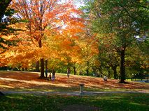 Autumnal park. Autumnal scene, park, autumn, fall, trees, red and yellow foliage, walking people, family, path, outdoor, New York stock image
