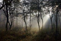 Autumnal park. Fog stock photos