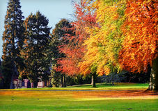 Autumnal park. Beautiful autumnal park with big trees in bright colour stock image