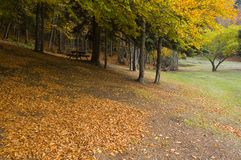 Autumnal park. Scenic view of picturesque park in Autumn stock photos