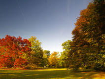 Autumnal park. Autumnal colored trees in a park Stock Images