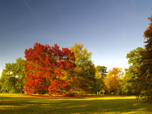 Autumnal park. Autumnal colored trees in a park stock photos