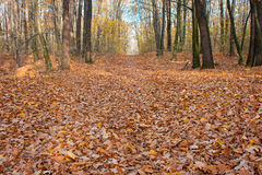 Autumnal park. The road through the autumnal park. Yellow trees Stock Image
