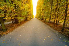 Autumnal park alley Royalty Free Stock Photography