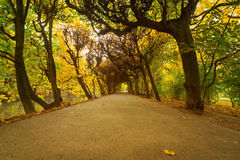 Autumnal park alley. Beautiful alley in the yellow autumnal park Stock Images