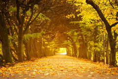 Autumnal park alley. Beautiful alley in the yellow autumnal park Stock Image