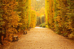 Autumnal park alley. Beautiful alley in the yellow autumnal park royalty free stock images