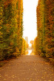 Autumnal park alley. Beautiful alley in the yellow autumnal park Royalty Free Stock Photography