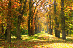 Autumnal park with big trees in yellow colors Stock Photo