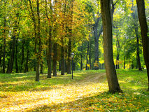 Autumnal park with big trees in yellow colors Stock Image