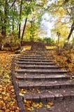 Autumnal park stock image
