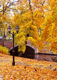 Autumnal park royalty free stock photography