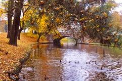 Autumnal park royalty free stock photos