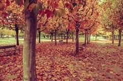Autumnal Park with the Ground full of Fallen Leaves Royalty Free Stock Photos