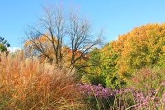 Autumnal park landscape Royalty Free Stock Photos