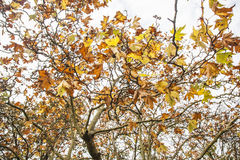 An autumnal park - leaves and branches. Stock Images