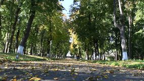 Autumnal park with promenade path and big trees. Autumnal park with promenade path big trees and bushes stock footage