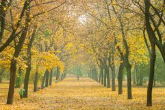 Autumnal park with road Stock Photography
