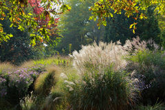 Autumnal park scenery with golden leaves perennials. Autumnal park with golden leaves and illuminated pampas grass Stock Images