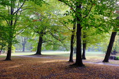 Autumnal park at sunset Stock Photography