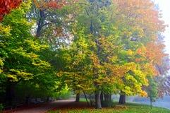 Autumnal park at sunset Stock Photo