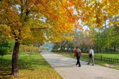 Autumnal park Royalty Free Stock Image