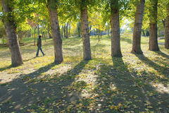 Autumnal park. The visitor walks in the autumnal woods in Jinci Park in Taiyuan, Shanxi, China stock image