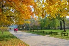 Autumnal park Stock Photography