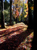 Autumnal Path. Colorful and beautiful autumnal walk path Stock Image