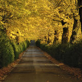 Autumnal path Stock Photography