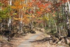 Autumnal path Royalty Free Stock Photo