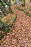 Autumnal Path through Gorge on the North Esk River in Glen Esk. Royalty Free Stock Photo