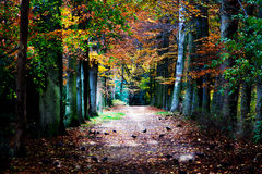 Autumnal pathway Royalty Free Stock Photo