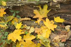 Autumnal pattern Royalty Free Stock Images