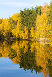 Autumnal pond Royalty Free Stock Image