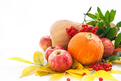 Autumnal pumpkins, apples and ashberry with fall leaves Stock Image